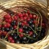 Сад в июле, работы с фруктовыми деревьями и ягодниками