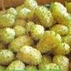 Шелковица белая и её выращивание в нетрадиционных районах