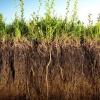 Сидераты весной: что посадить на дачном участке?