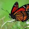 Символ бабочки в фен-шуй — как его использовать в интерьере?