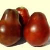 Сорт томата японский трюфель черный — помидор с хорошей репутацией для вашей теплицы