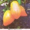 Томаты оранжевые, полезные и вкусовые качества, сорта оранжевых томатов