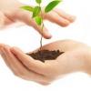 Углекислый газ, глюкоза и углеродная жизнь в основе жизни жизни растительного мира