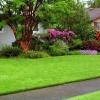 Виды декоративных газонов