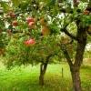 Вредители плодовых деревьев — кого стоит опасаться садоводу