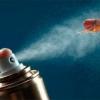 Все чем можно убить паразитов! Эффективные средства от блох: шампуни, прививки, спреи и другие