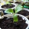 Выбираем грядки для посева зелени