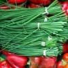 Выращиваем шнитт-лук из семян