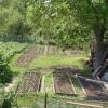 Выращивание огурцов в траншеях-коробах