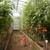 Выращивание овощей круглый год в теплице