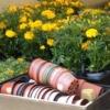 Выращивание рассадой цветов - астры, бархатцы, настурция