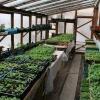 Выращивание рассады для высадки в теплицу из поликарбоната: когда сеять и что выгоднее сажать?