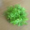 Зелень укропа и петрушки в домашней косметологии