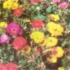 Живые цветочные коврики в саду